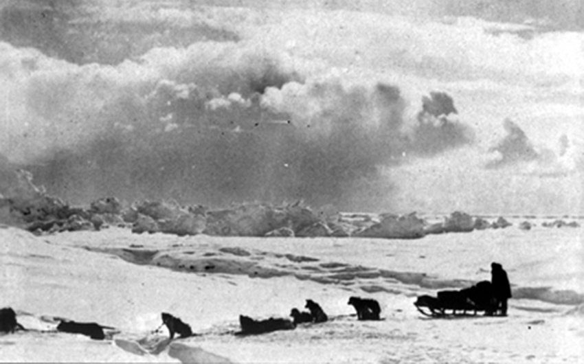 black and white image of sled dogs pulling sled across arctic landscape